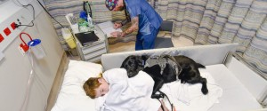 therapy dog autism